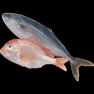 http://www.orai.kz/wp-content/uploads/2018/04/fish-300x300.png