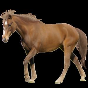 https://www.orai.kz/wp-content/uploads/2018/04/horse-300x300.png